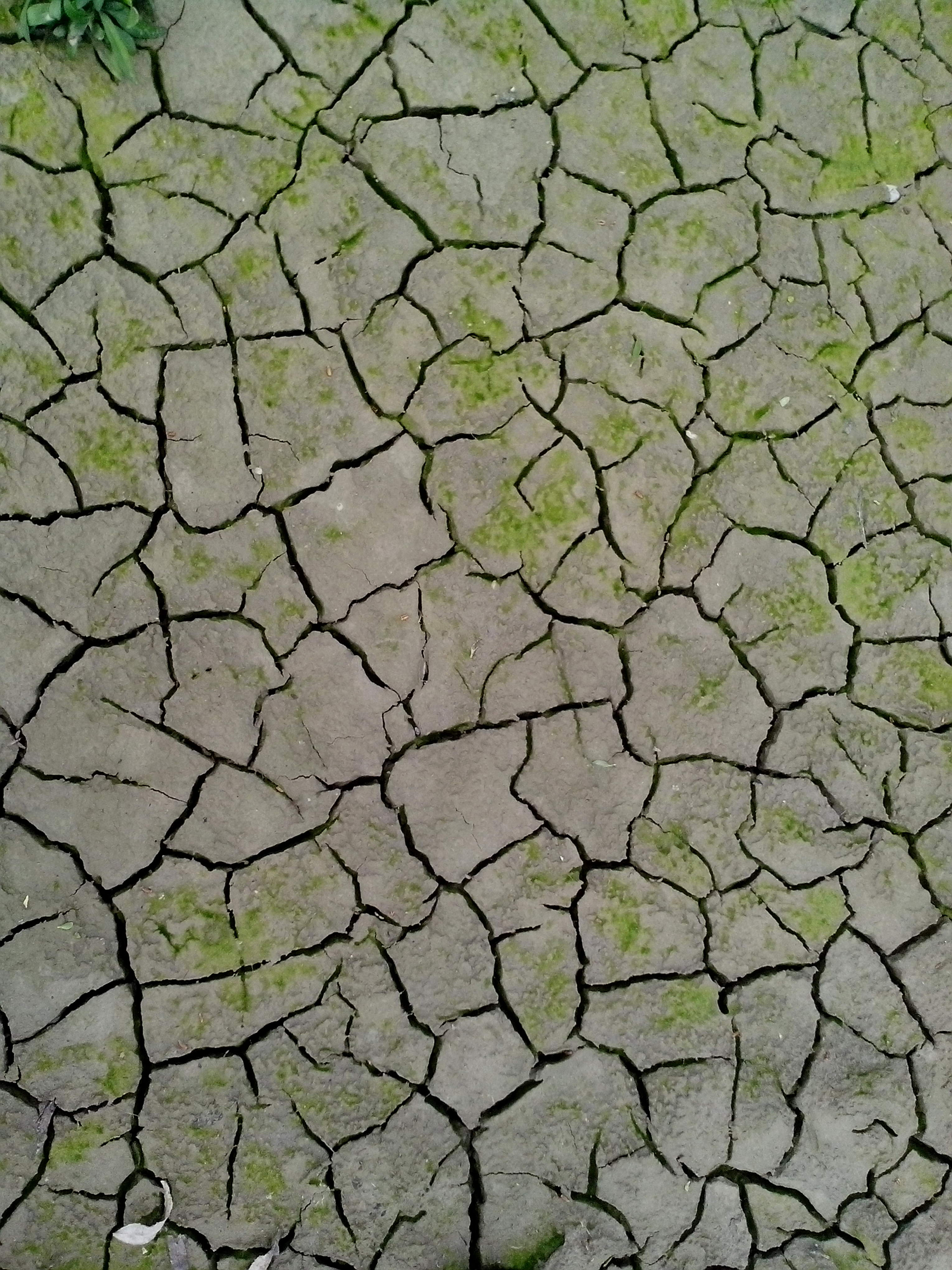 Free picture dry cracks earth texture