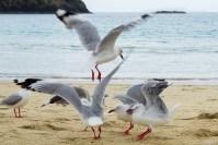 Flock of Seagulls 3