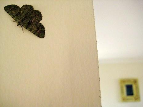 Little Green Moth