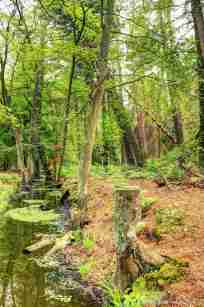 Rowy - im Wald
