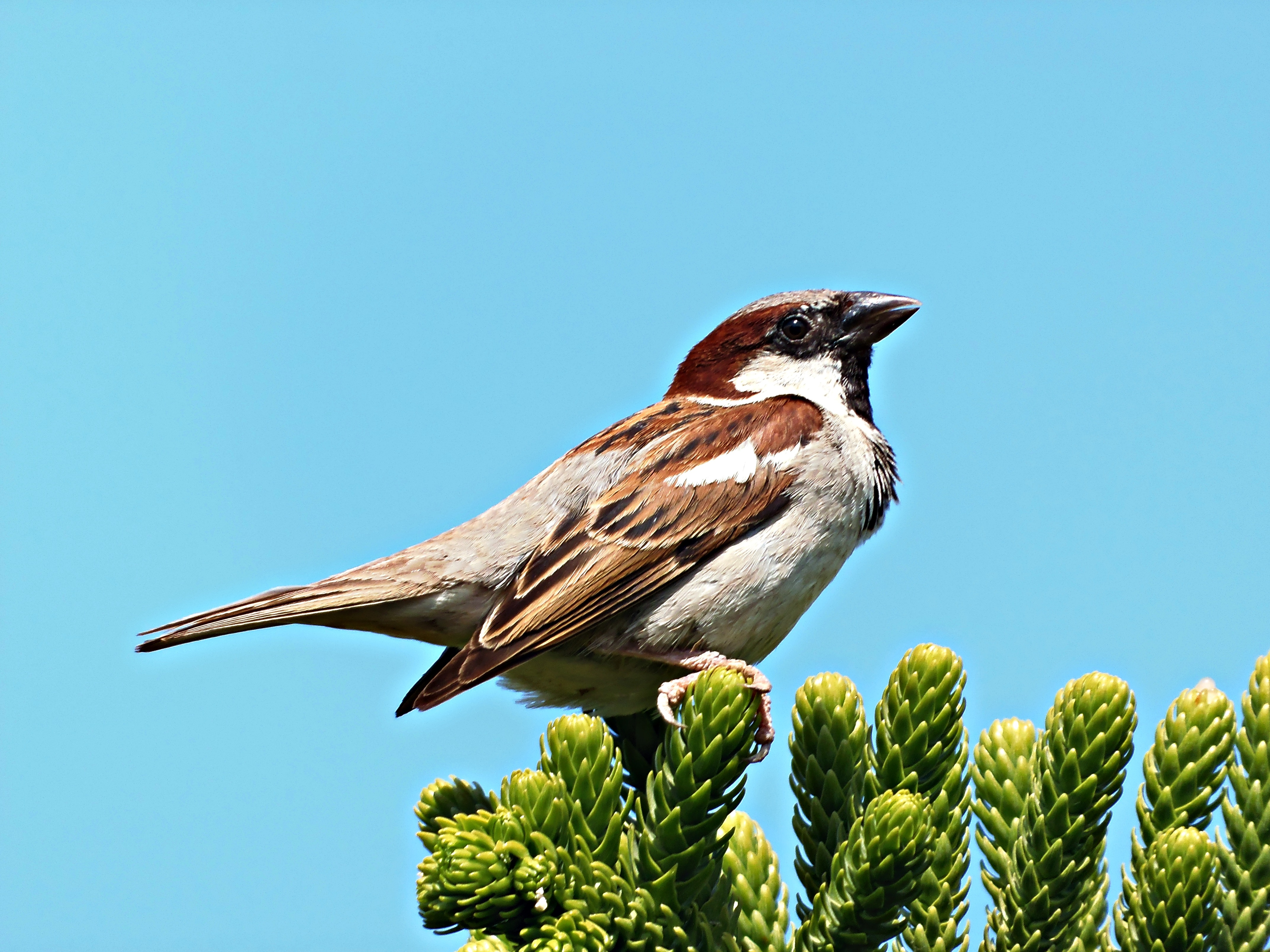 Free Beautiful Sparrow On Green Plants Free Image
