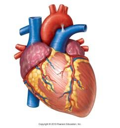 human heart diagram unlabeled [ 1344 x 1008 Pixel ]