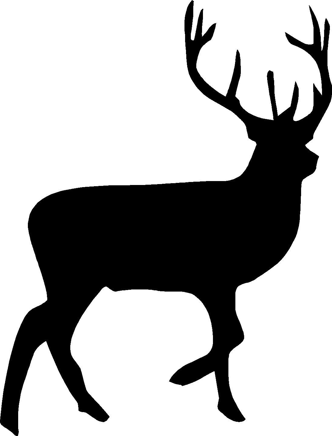 Whitetail Deer Illustrations, Royalty-Free Vector Graphics