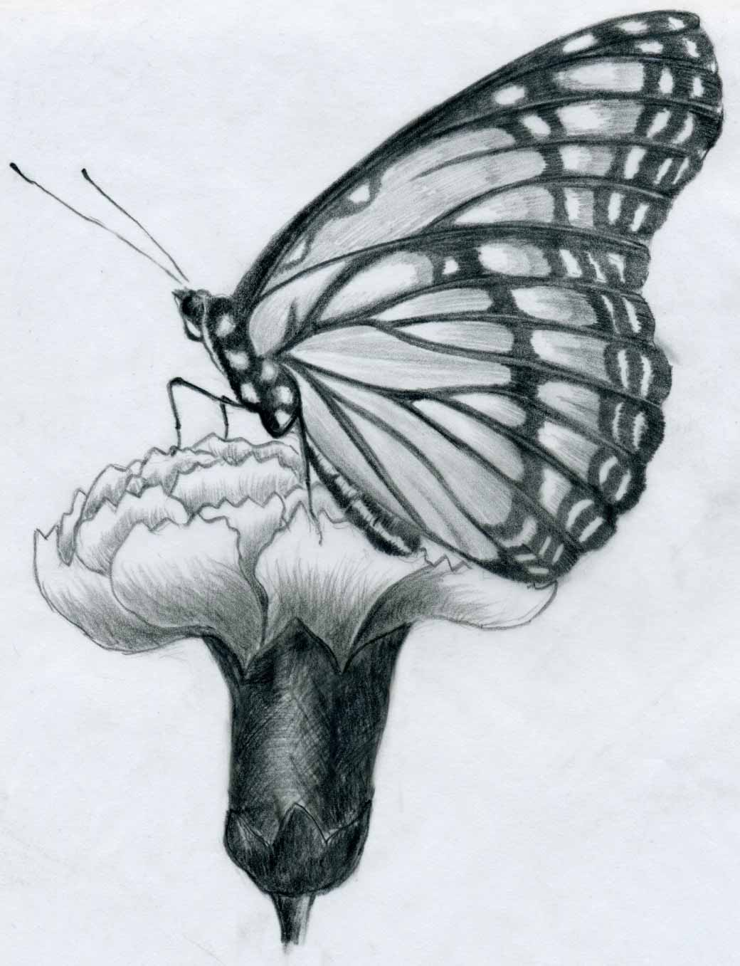 Pencil Drawings Of Flowers And Butterflies : pencil, drawings, flowers, butterflies, Butterfly, Flower, Pencil, Drawing, Image
