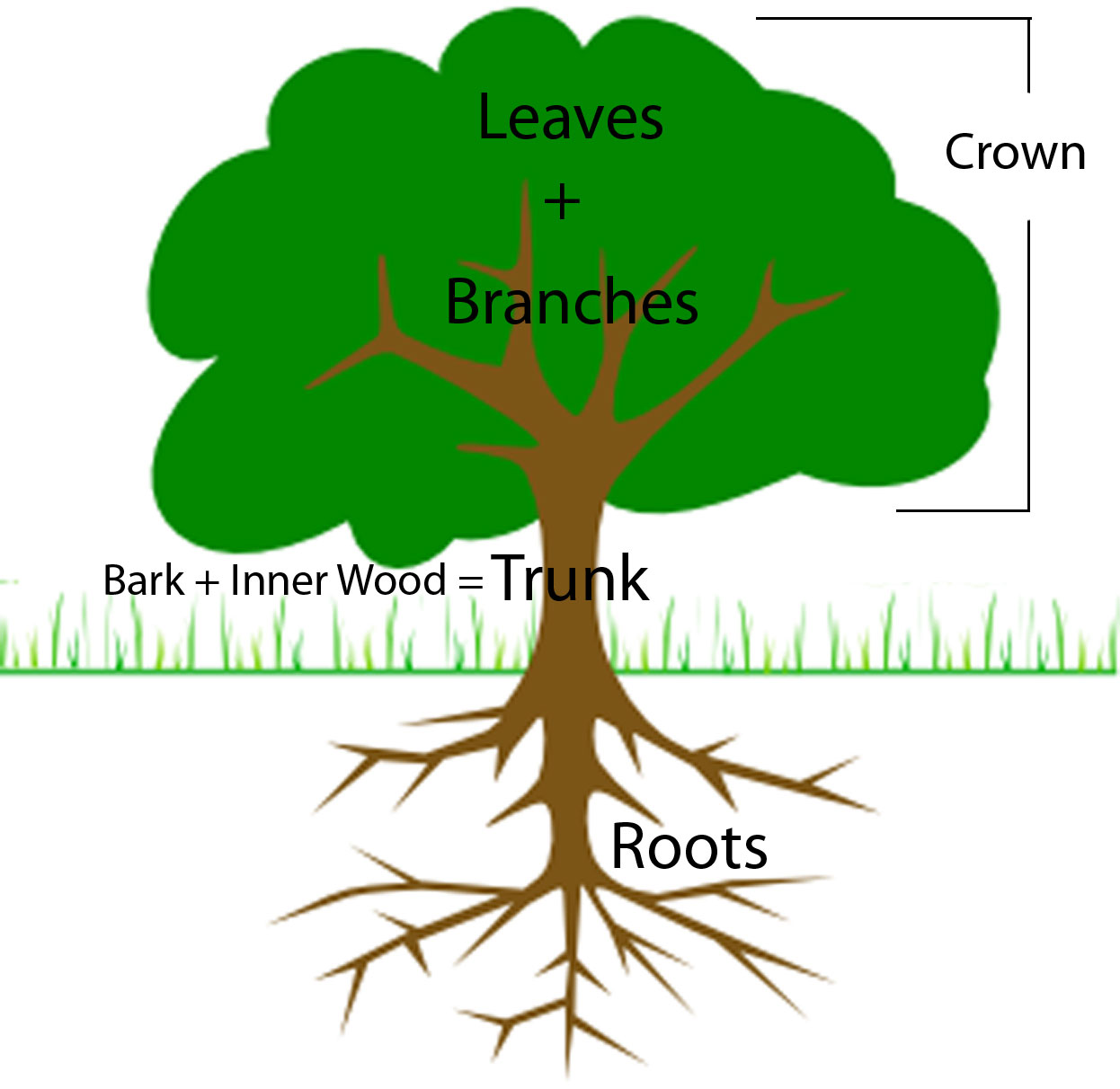 hight resolution of labeled tree diagram