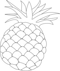 Outline drawing of a pineapple fruit free image