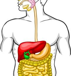 digestive system diagram [ 1310 x 2289 Pixel ]
