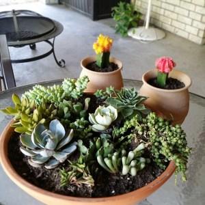 My 1st succulent garden