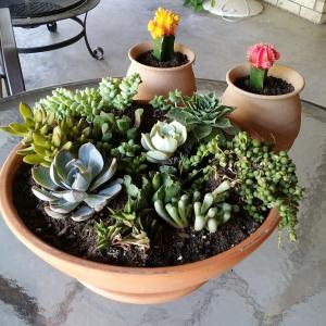 My succulent garden!