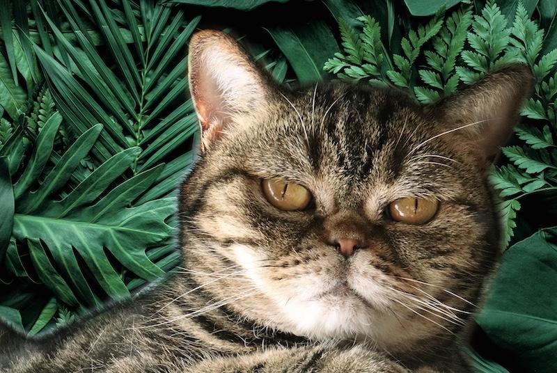 猫が緑がかったのがおわかりいただけるだろうか?