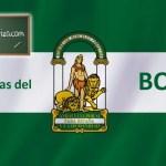 MAESTROS: CONVOCATORIA PARA EL ACCESO EXTRAORDINARIO A BOLSAS DE TRABAJO