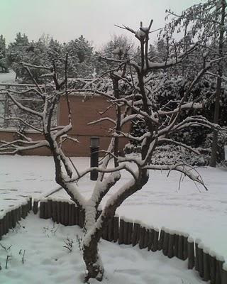 Madrid nevado 3