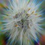 lens-distorsion