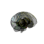 Cerebro III