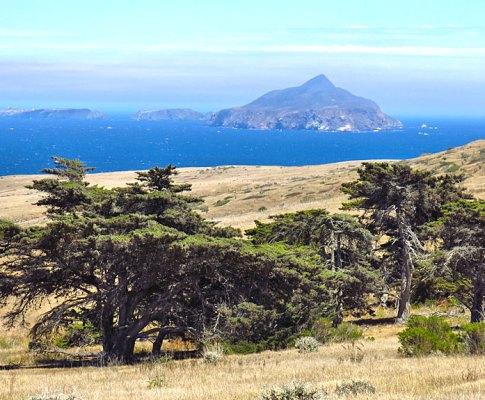 The Island Fox on Santa Cruz Island