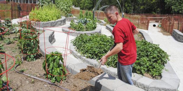 manure in the garden_blog_1