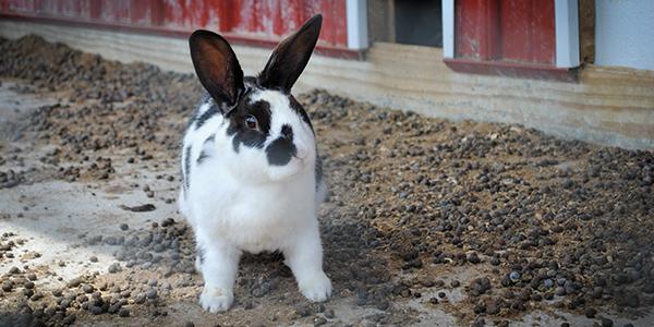 rabbits manure_blog