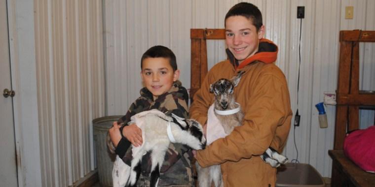 goat birth reluctant_blog_6