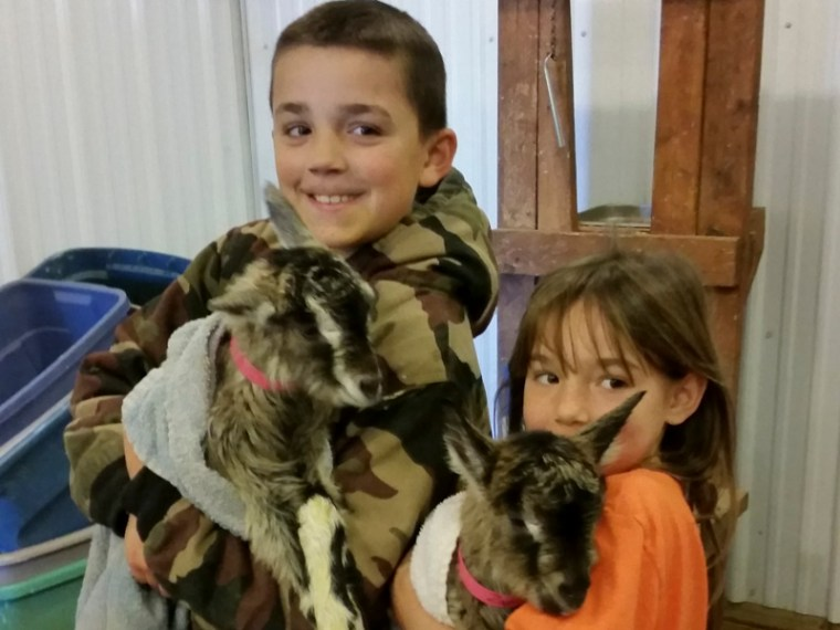 baby goats zinnia_blog