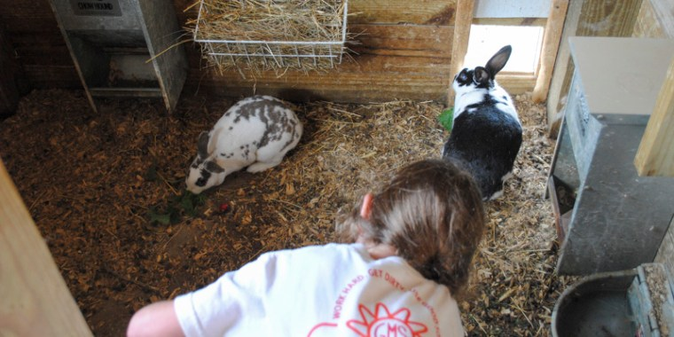 Indigo feeding the rabbits_2