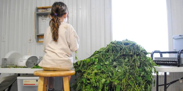 jade chopping jewelweed_blog