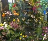 Orchard Show Botanical Gardens NY