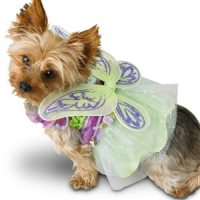 Tinkerbell dog costume - Dog Boutique