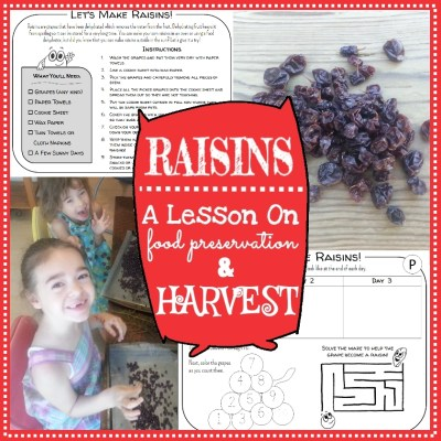A fun & yummy science experiment your young children can do to learn about food preservation through dehydration. Includes 5 printable pages of raisin making fun that preschool, kindergarten and 1st grade age kids can do together.