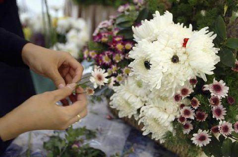 Flower for PetLovers