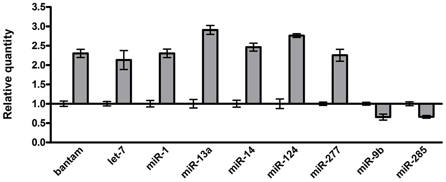 hight resolution of identification of the mirnas with altered expression in the brains of an fxtas i