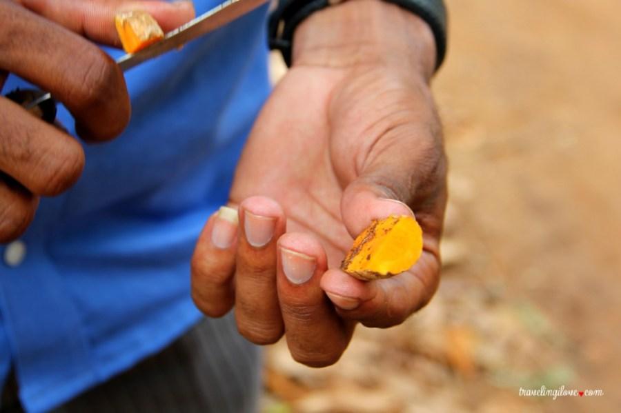 Spice tour - plantacje przypraw na Zanzibarze dla turystów