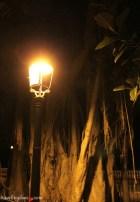 Icod-de-los-Vinos-by-night-18