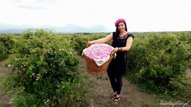 Festiwal Róż w Bułgarii 2017 (26)