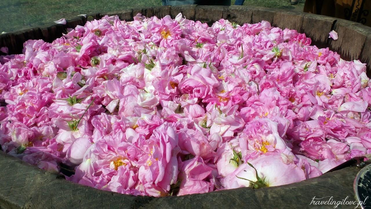 Tradycyjna destylacja olejku różanego w Bułgarii (3)