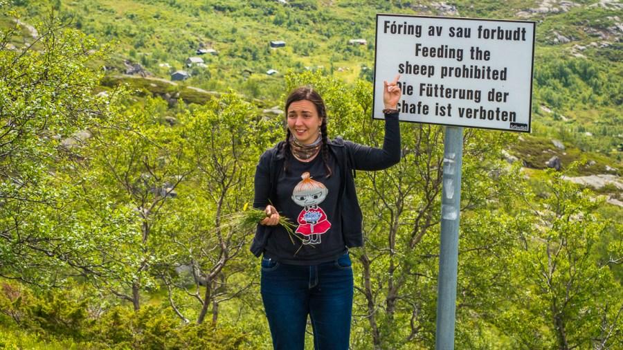 Nie karmić owiec w drodze na Kjerag