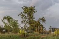Leven Thailand grote boom 4 5 2020