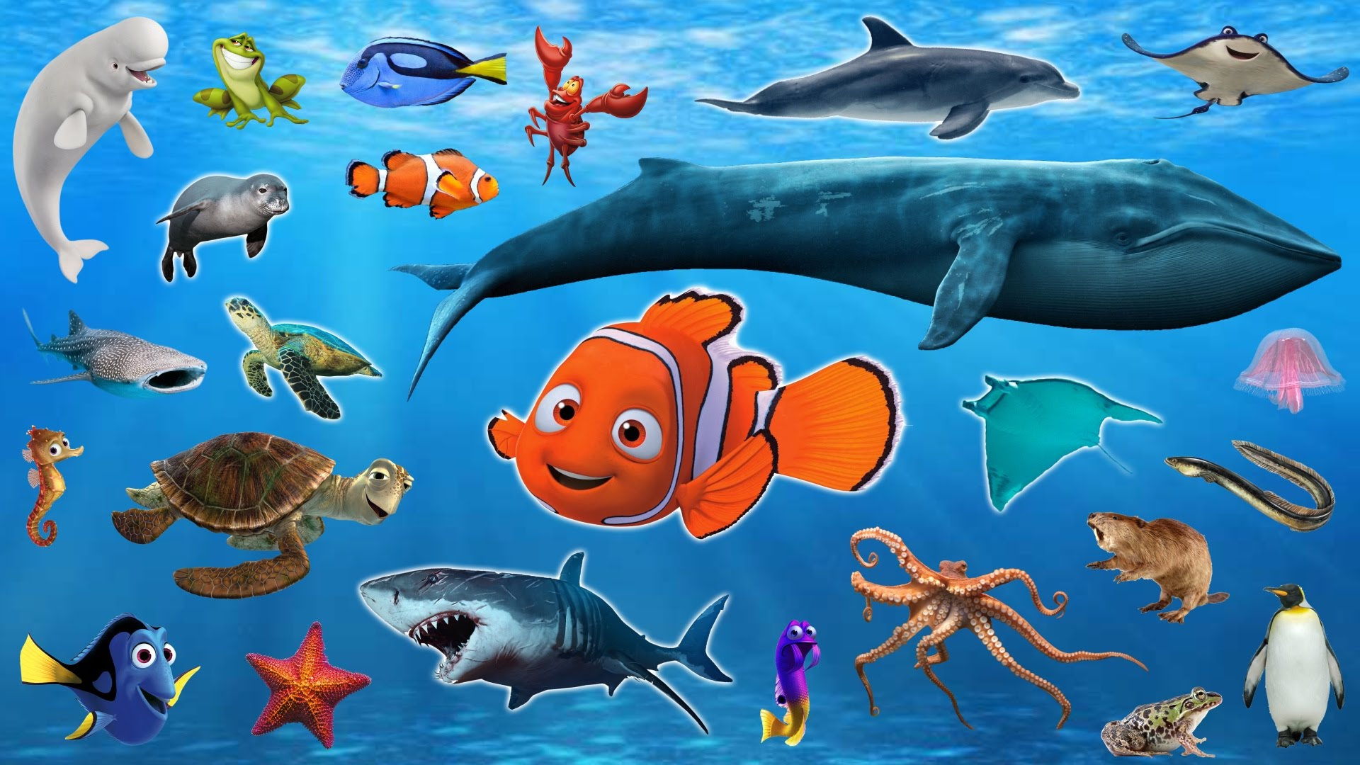 Learn Sea Animals Water Animals Names And Sounds