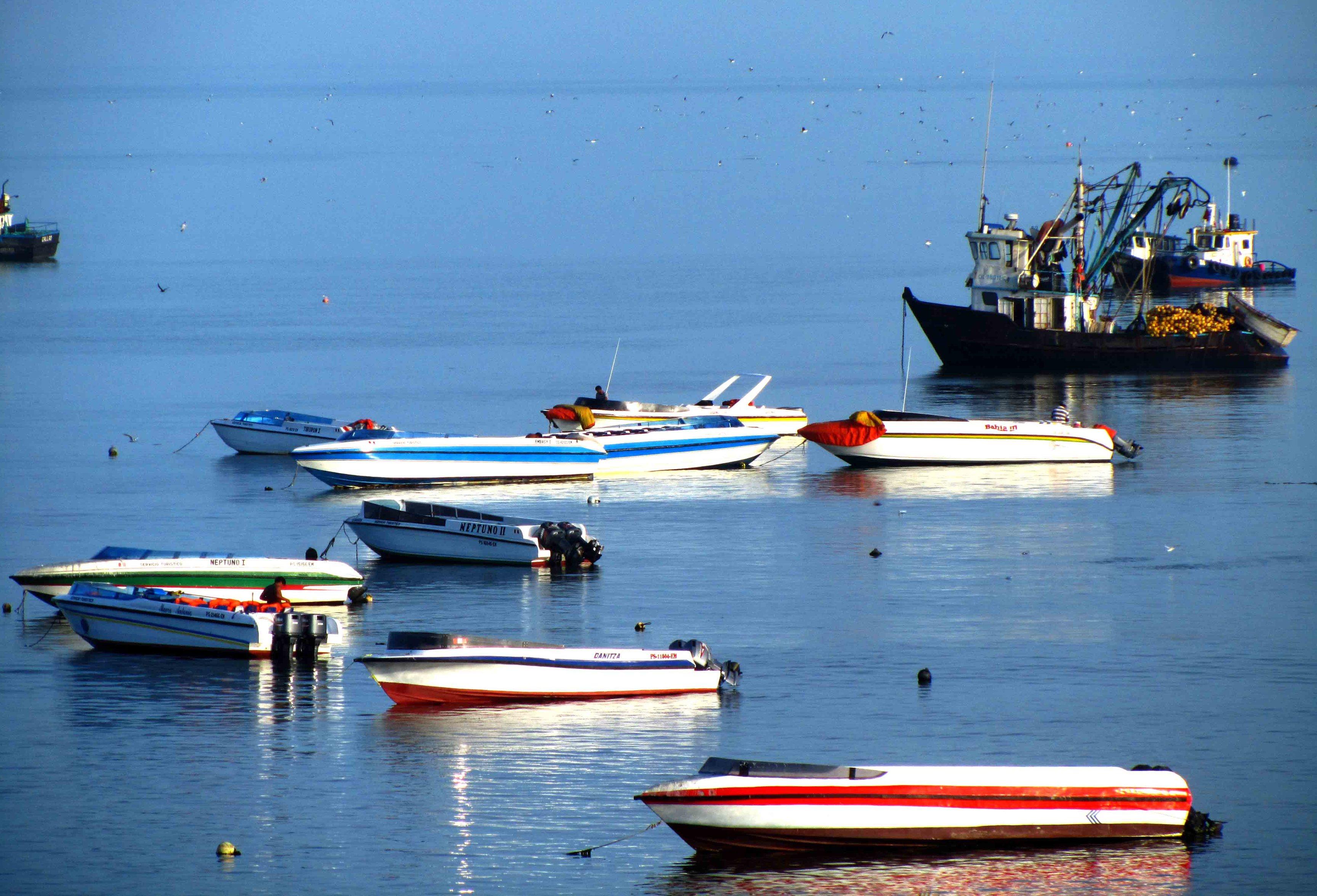Bungavilla Tours nos preparó el viaje a Islas Ballestas. Buganvilla Tours prepared our trip to Ballestas Islands. Paracas, Peru Photo credit, placeOK