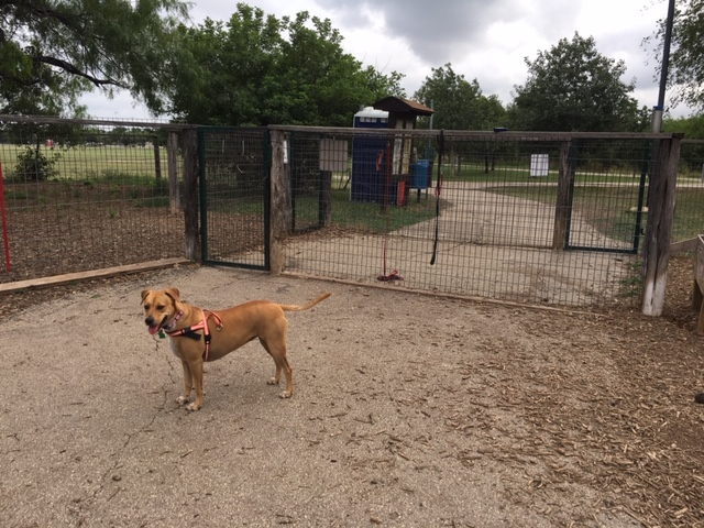 The double gated entrance providing access to both the small dog and large dog areas.