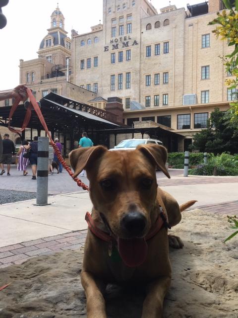 Hotel Emma has dog friendly dining.