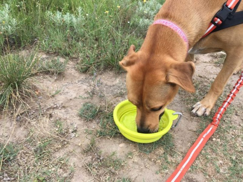 The collapsable water bowl is easy to use and works on the go.