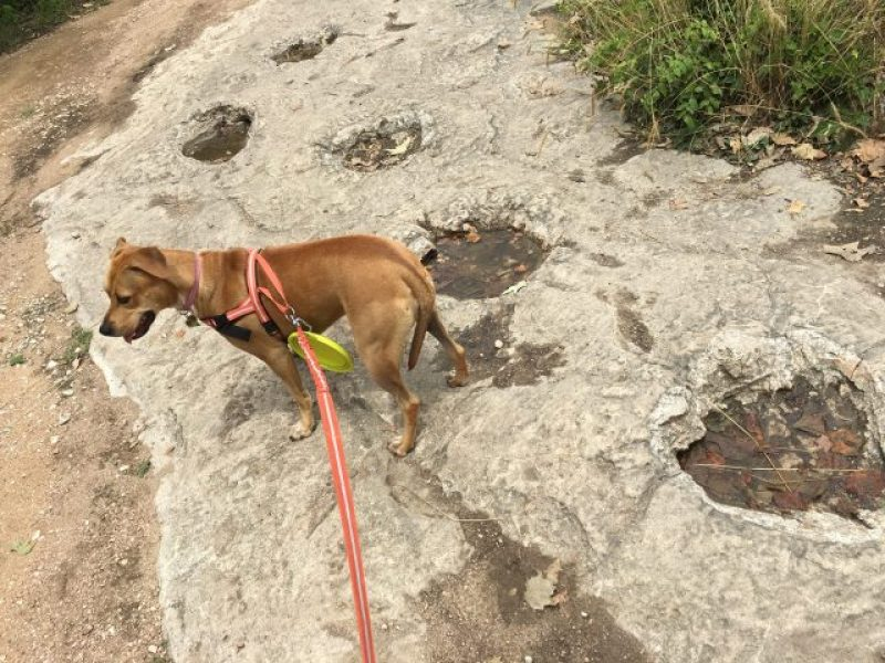 A view of the dinosaur footprints at the nature center next to my dog, Abbey