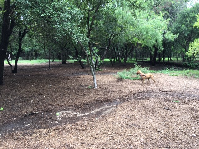 The best dog park in San Antonio should not appear so muddy and full of weeds.