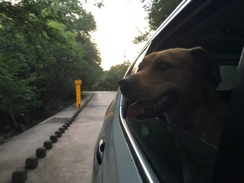 A list of dog friendly things must contain a car ride.