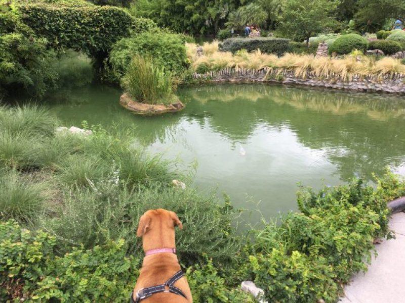 Pond at the Japanese Tea Garden in San Antonio.