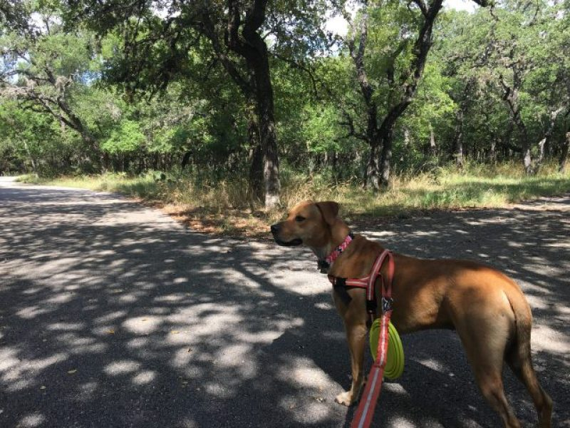 Miles of dog friendly paved hiking trails at McAllister Park.