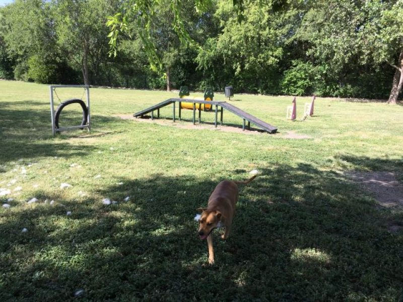 Most of the obstacles in the dog agility area.  Greenest dog park in San Antonio!