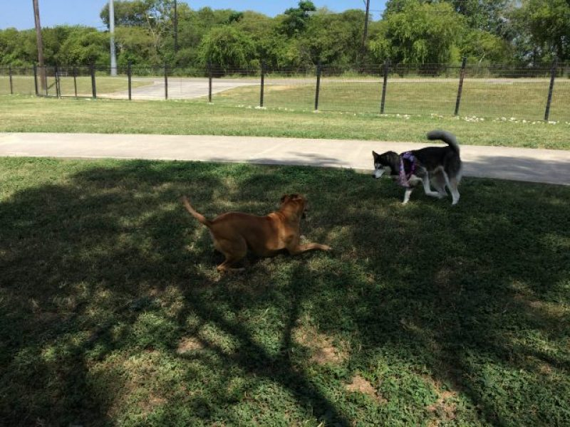 The dog park is one of the very best things to do in the eyes of a dog.