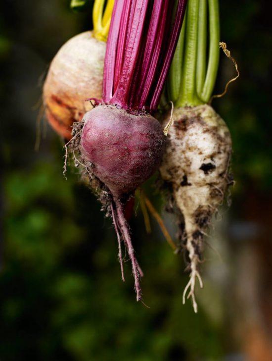root vegetables House & Garden