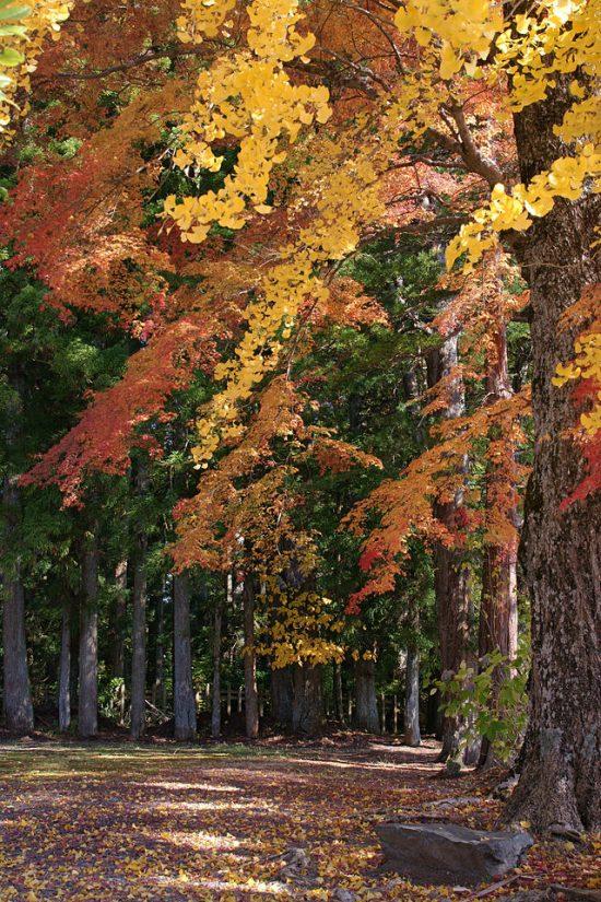 Autumn_Koyasan_Wakayama04s5s4272